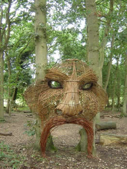 willow head